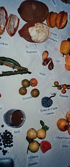 Früchte des Amazonas
