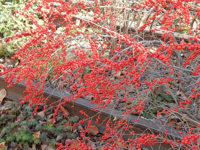 Gleise und Pflanzen im Winter an der High Line New York.