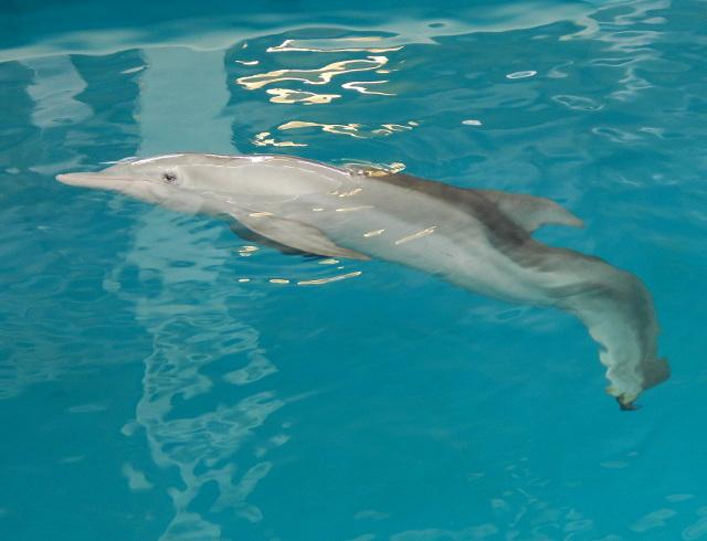 Filmheld Winter im Clearwater Aquarium
