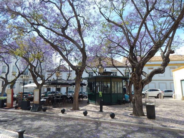 Speisen unter dem Jacarandabaum.