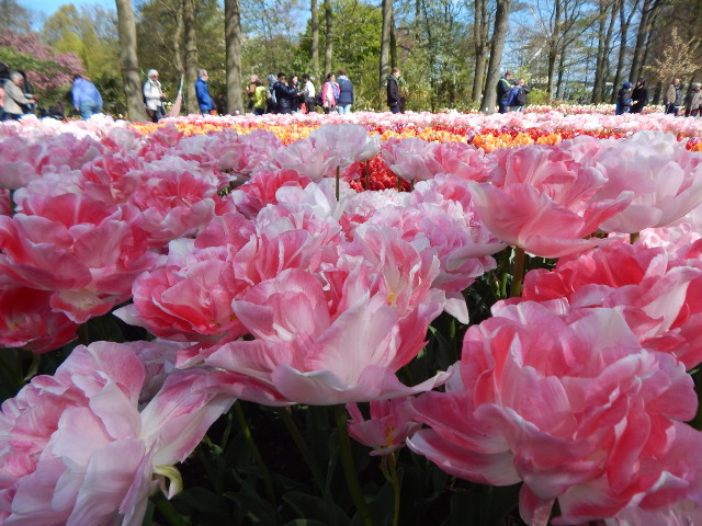 Was für eine rosafarbene Blütenpracht!