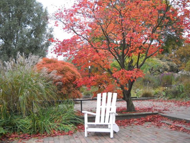 Herbstbilder, rote Blätter am Baum und weißer Stuhl