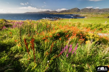Irland - Ring of Beara 12