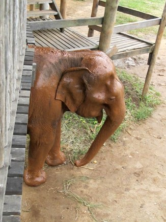 'I've just been for my mud-pack - does it make my trunk look big?'