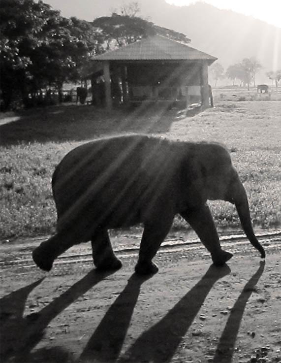 Early morning walk, Elephant Nature Park, Chiang Mai