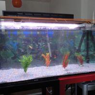 Nuevo acuario - 3