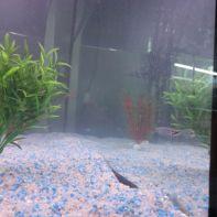 Nuevo acuario - 8