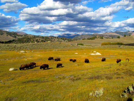 Yellowstone, Part I