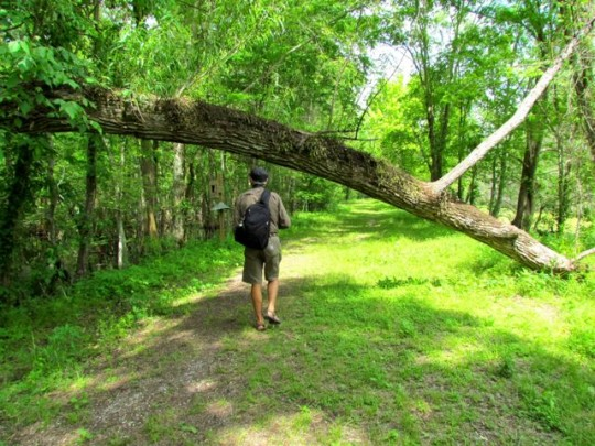 Trail At Lake Martin