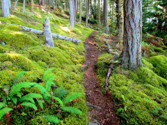 Mossy Trails At Watmough Bay