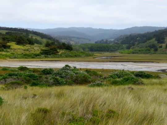 Picturesque Coastal Marsh