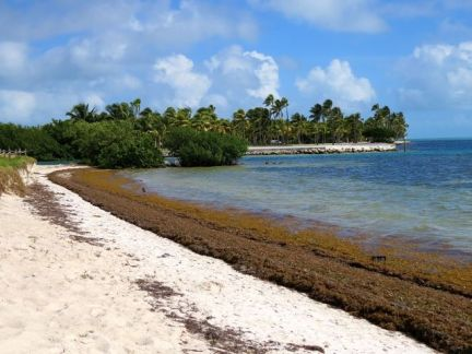 The beach at Curry Hammock State Park