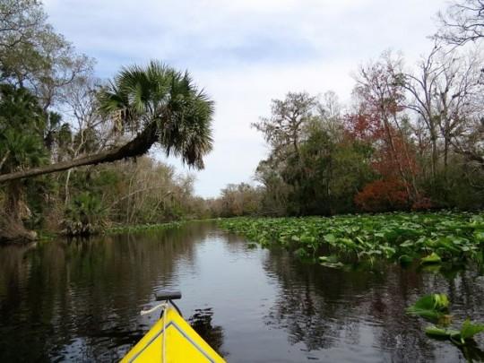 Kayaking The Wekiva River