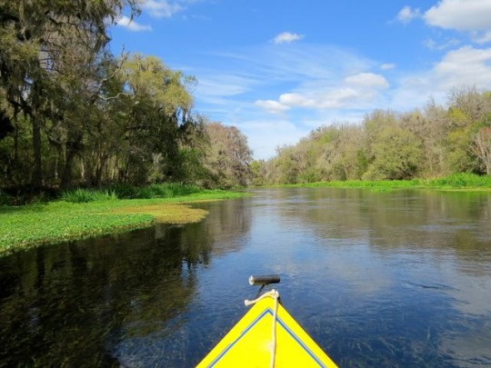 A Perfect Day On The Ichetucknee River