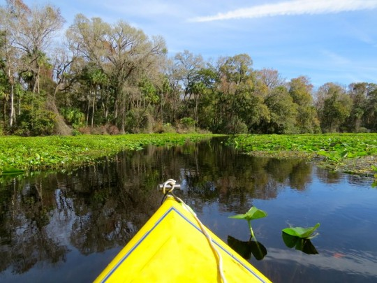 A Kayaking Extravaganza: Florida Springs
