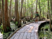 On the boardwalk at the preserve