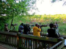 Birders and photographers