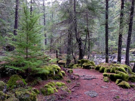 Peaceful Autumn Hike Along The Upper Rogue
