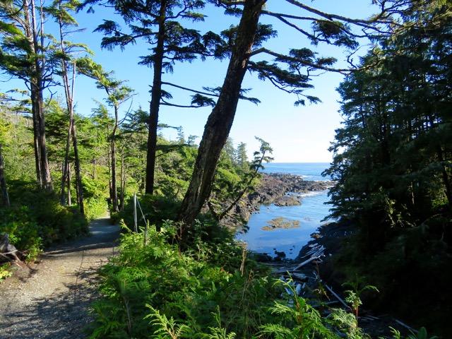 Trails hug the shoreline