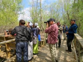 Many Amish are avid birders
