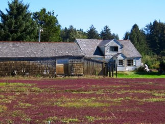 Cranberry harvest time