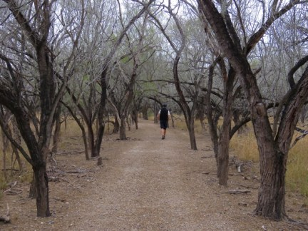Hiking through mesquite scrub