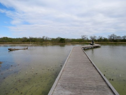 Boardwalk Estero Llano Grande