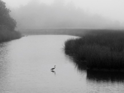 Davis Bayou on a foggy morning