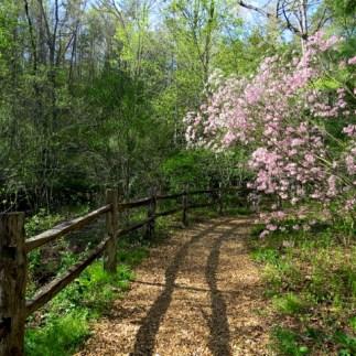 Miles of beautiful trails at the arboretum