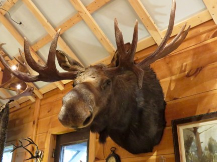Moose, in case you need one