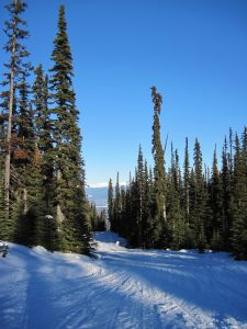 You can ski for 4+ kilometers from Hudson Bay Mountain to the valley bottom, a walk manageable in ski boots to downtown Smithers
