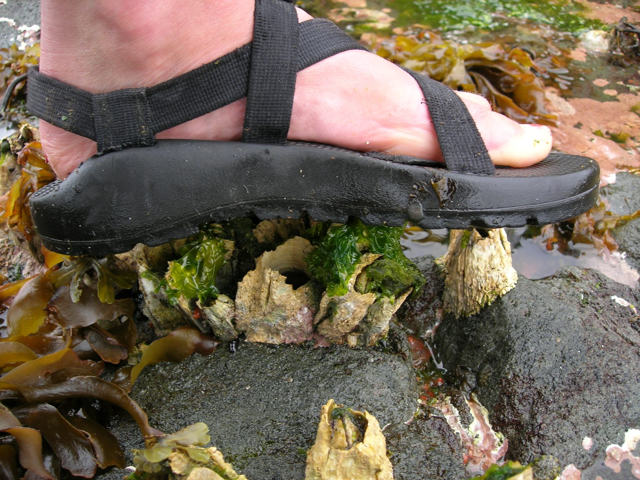 Footwear for Sea Kayaking & Whitewater Rafting: A Solution That Works for Me