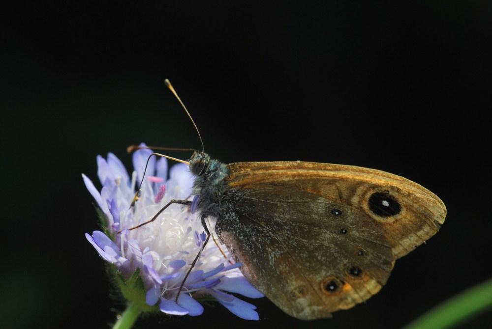 Butterflies and moths (1/6)