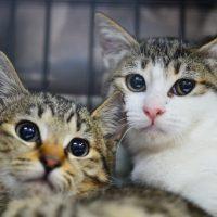 【猫】本年最後の猫の里親譲渡会〜野崎商店街 にゃんこのみち