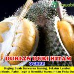 Jual Bibit Durian Duri Hitam – Bibit Tanaman Durian Unggul Dari Malaysia Dengan Bercita Rasa Nikmat, Bersifat Genjah dan Tingkat Produktifitas Tinggi