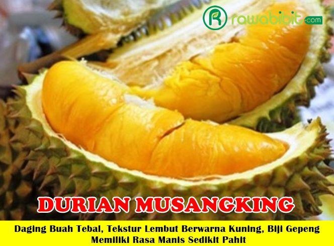 Durian Musangking Unggul