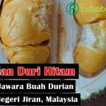 Durian Duri Hitam, Durian Unggul Dengan Gelar Sang Jawara Durian dari Negeri Jiran, Malaysia