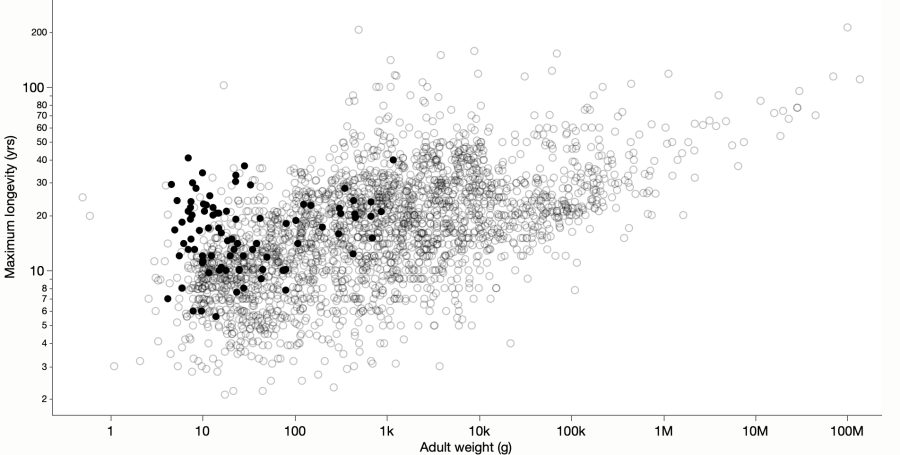 Scatterplot showing lifespan versus adult weight for many animal species.