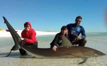 anita-shark-7