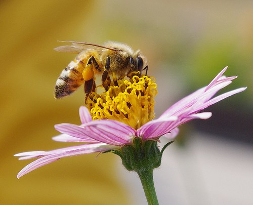 Royal Jelly and Bacterial and Viral Infections