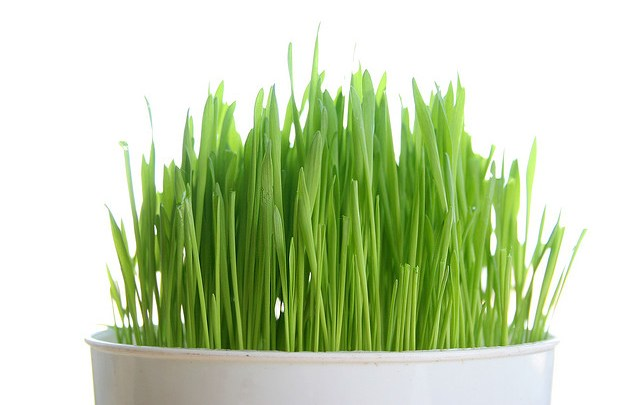 Wheatgrass Juicing: Three Things to Know