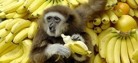 Are Bananas the Most Dangerous Fruit in the World?