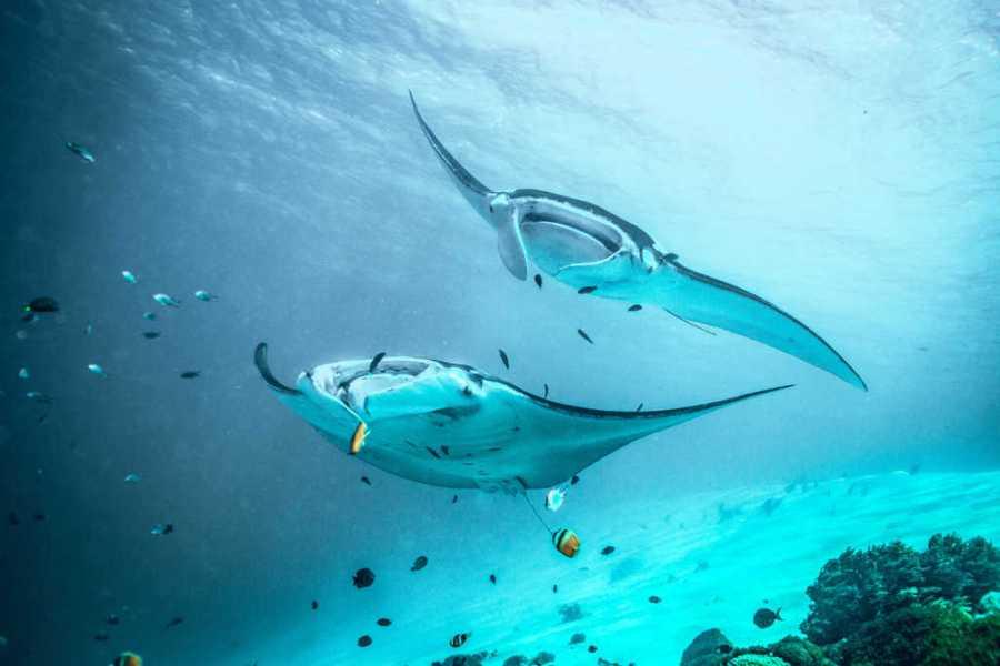 manta point Nusa Penida, manta rays