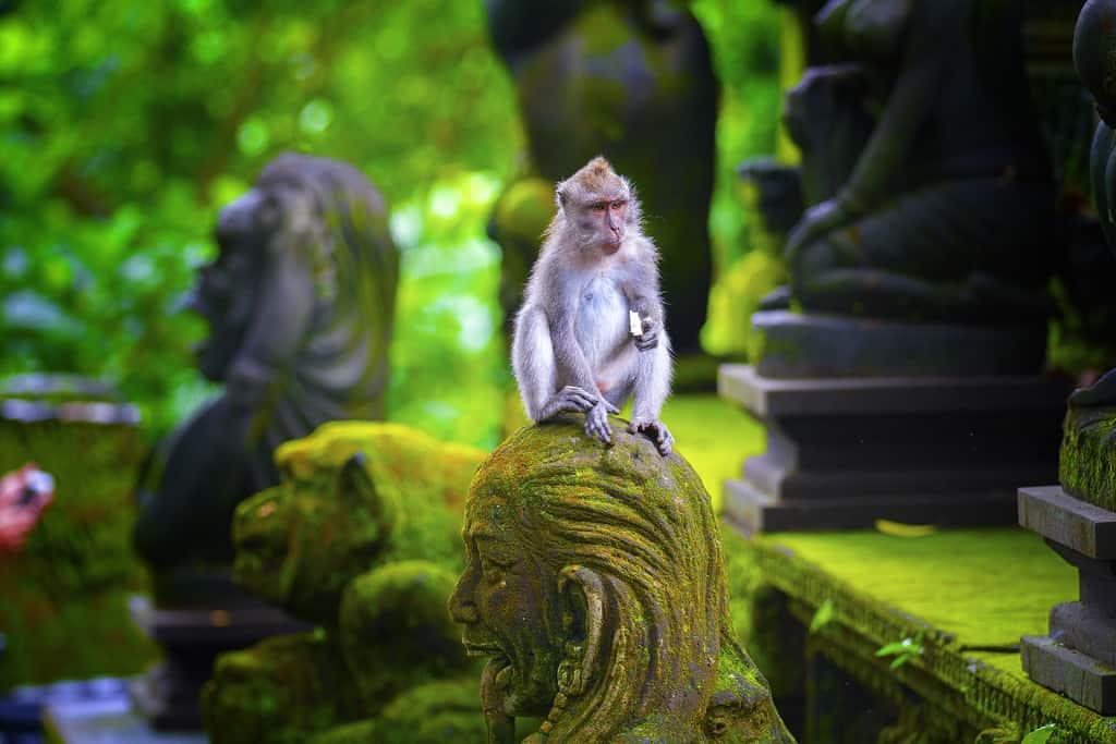 ubud monkey sanctuary, bali