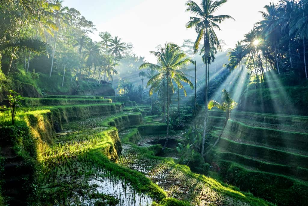 The Ultimate Ubud Itinerary – How to spend 1-4 days in Ubud.