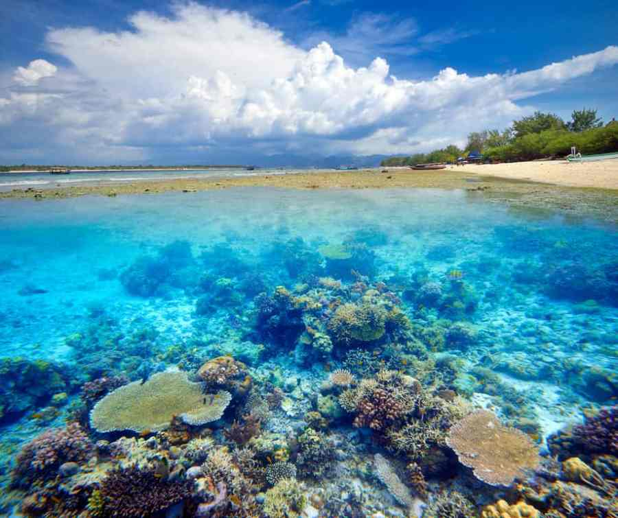 the Gili Islands, coral reef