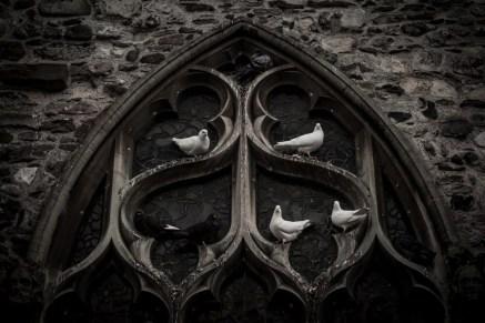 Dove's collocation