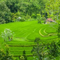 a weekend getaway:  therapy on green