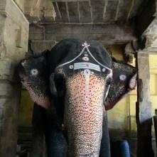 Seen in a Hindu temple.