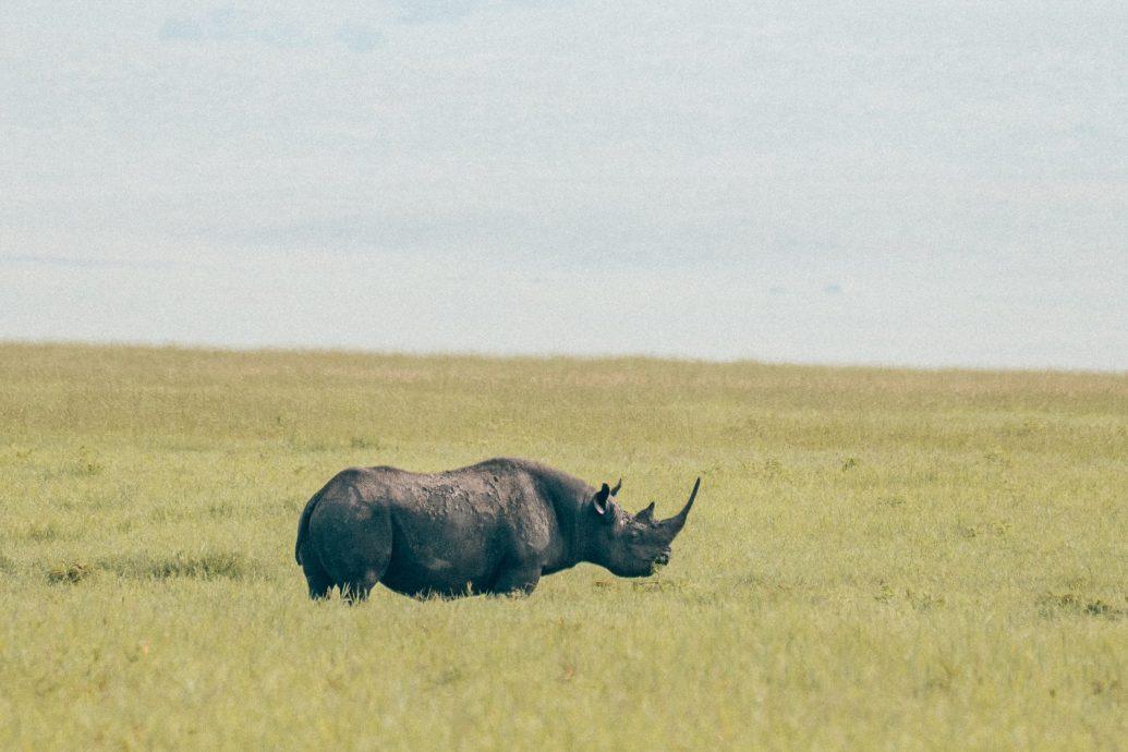 rhino safari